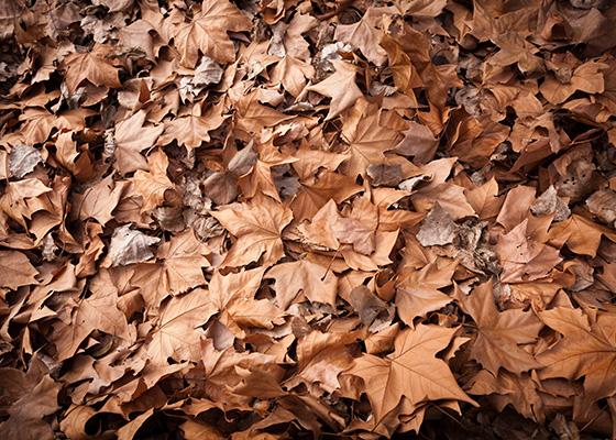 Dode bladeren